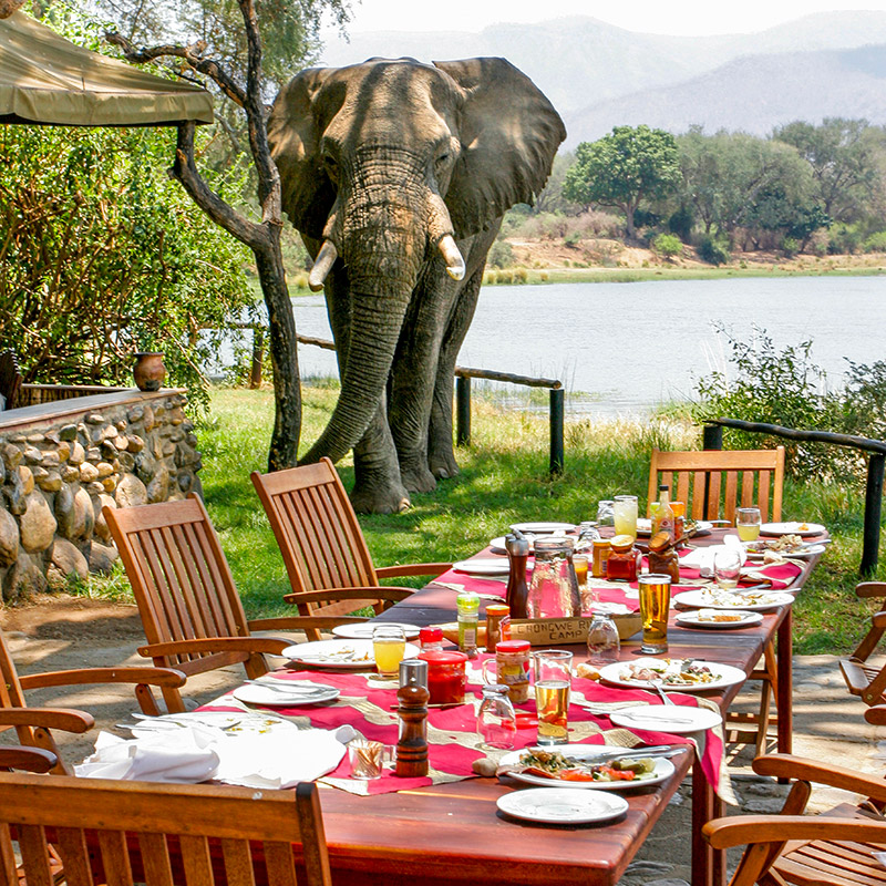 Elephant joins safari lunch