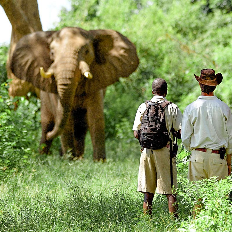 Walking safaris grid
