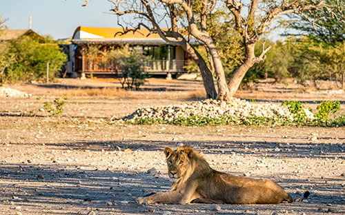 Anderssons camp ongava namibia 05