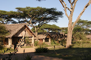 Ndutu lodge 02