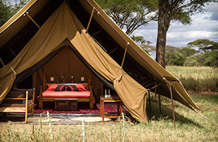 Serengeti wildlife safari camping 02