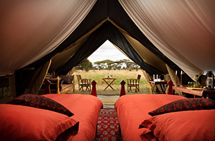 Serengeti wildlife safari camping 03