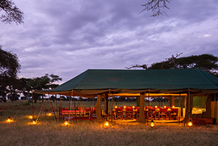 Serengeti wildlife safari camping 06