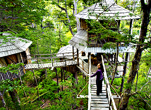 Treehouse Camp Wilderness Travel