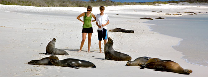 Sea lions at Gardner Bay, Española Island, Galapagos