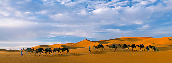 morocco camel safari; sahara desert to Marrakesh tour; camel trek