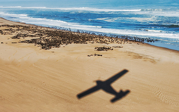 namibia skeleton coast flight plane seal colony
