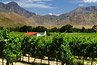 south africa vineyards winelands