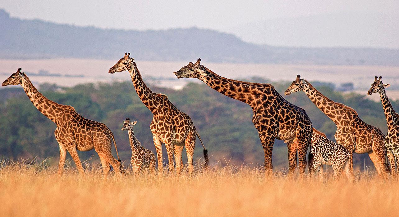 tanzania private journey itinerary map wilderness travel