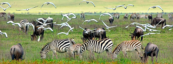 tanzania private trip; serengeti safari; game migration