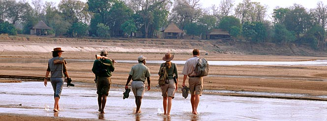zambia walking safari; luangwa national park