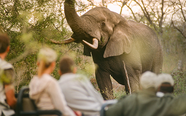 south africa zimbabwe game drive elephant tourists
