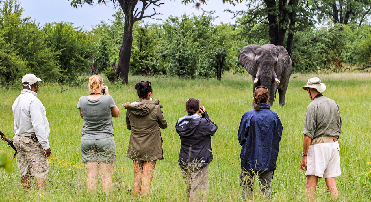 zimbabwe green season walking safari clients watching elephants camelthorn