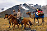 Horseback riders in Mongolia's High Altai with Bactrian camels