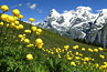 Meadow, wildflowers, and view of the Eiger, Monch, and Jungrau in Switzerland