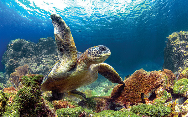Trips in the Galapagos - Wilde...