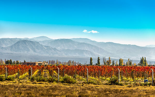 chile wine country vineyard