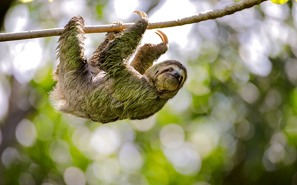 Costa Rica | Walking and Wildlife Tour | Wilderness Travel