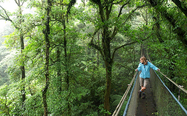 costa rica monteverde cloud forest tree top suspension bridge