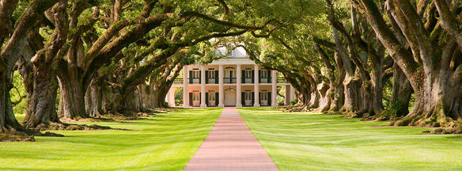 Plantation house in Mississipi with canopy of trees