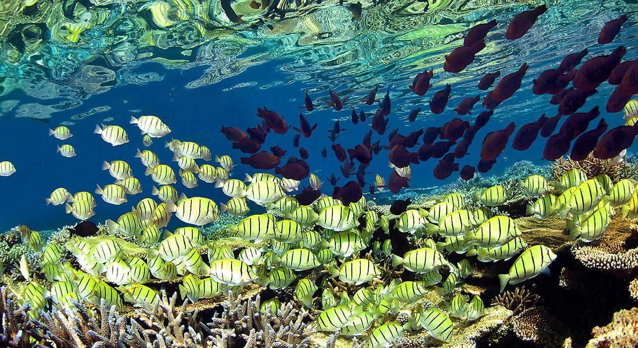 Komodo Snorkeling Expedition - Itinerary & Map ...
