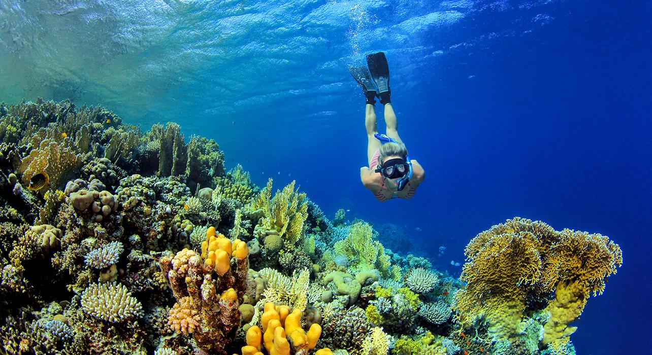 Komodo Island Diving Tours