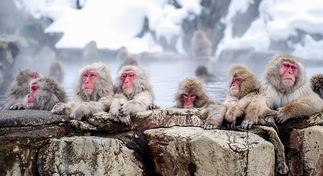 Japan: Snow Monkeys and Winter Cranes - Itinerary & Map ... - photo#33