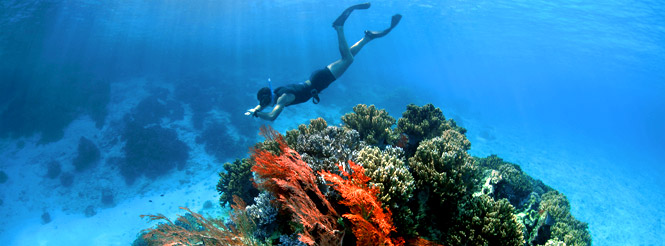 Snorkeler above coral reefs in the Philippines