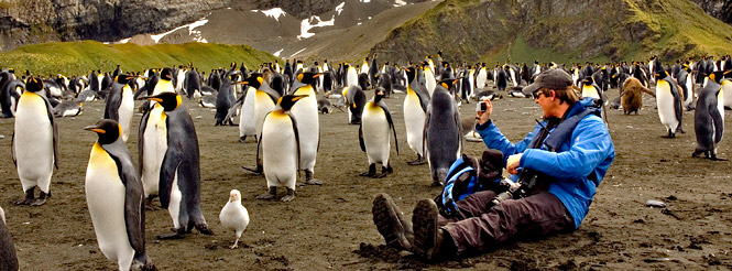 photographer; king penguin colony; south georgia island; antarctic cruise